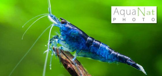 Bienvenue sur AquaNat-photo