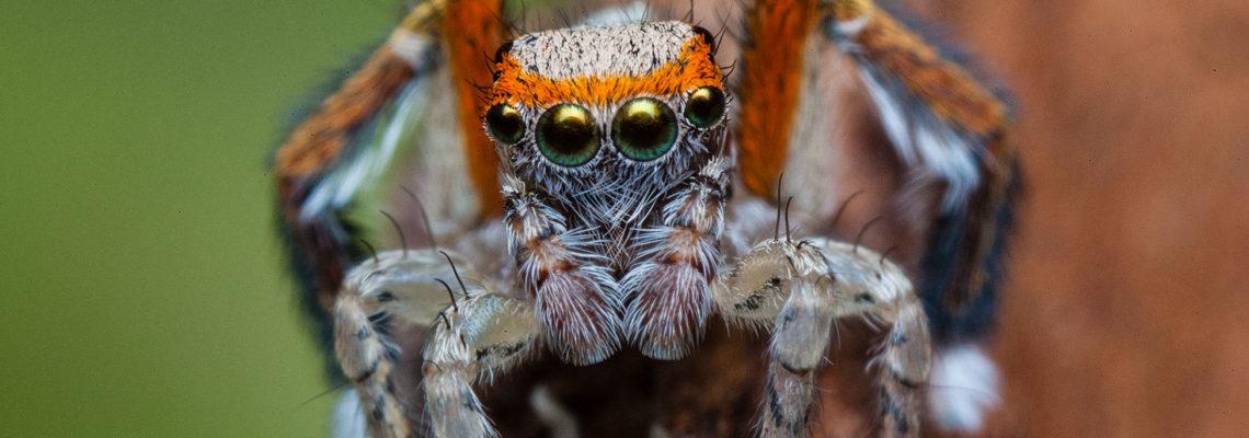 Connaissez-vous vraiment les araignées ?