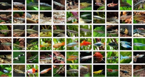 Évolution Liste d'espèces
