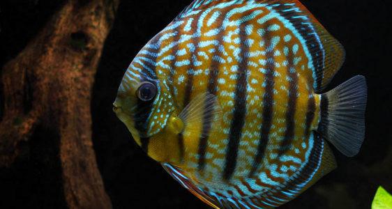 Comment photographier mes poissons