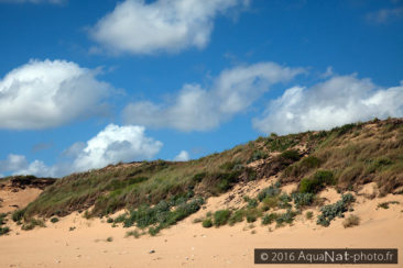 Dunes du littoral Atlantique