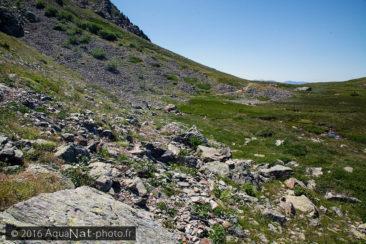 Éboulis rocheux à 2000 mètres d'altitude abritant Sitticus longipes