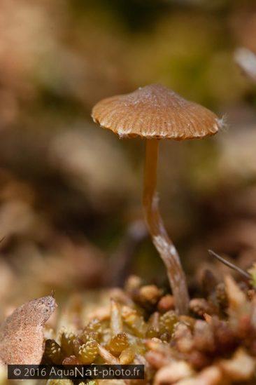 L'humidité et le support dense de la sphaigne offres des conditions optimales pour certains champignons.