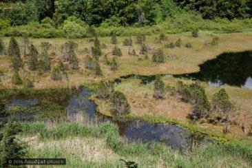Vue du Lac et des radeaux flottants qui couvrent peu à peu la surface.
