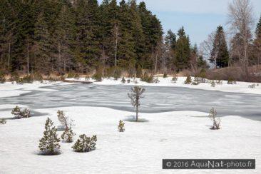 Le Lac est encore gelée (Avril 2013)
