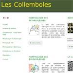 Collemboles.fr